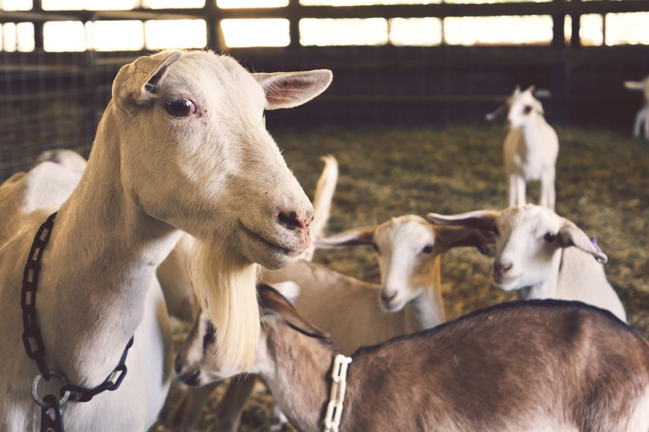 What's so good about Goat's Milk